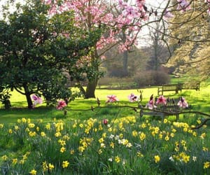 beauty, spring, and garden image