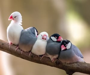 birds, nature, and cute image