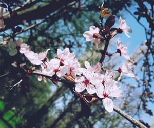 aesthetic, bloom, and spring image