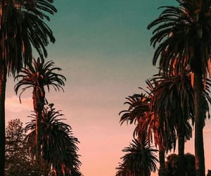wallpaper, hollywood, and palm trees image