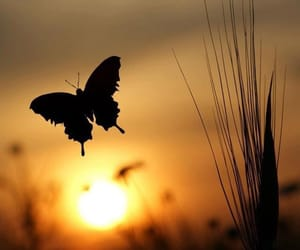 butterfly, sunset, and sun image