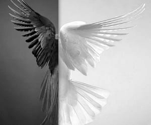 angel, art, and black image