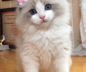 adorable, adoration, and gatito image