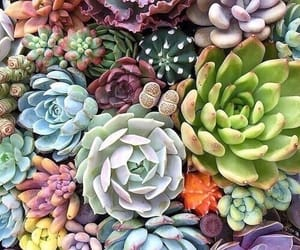 plants, cactus, and flowers image