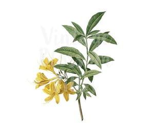 botanical, digital print, and floral image