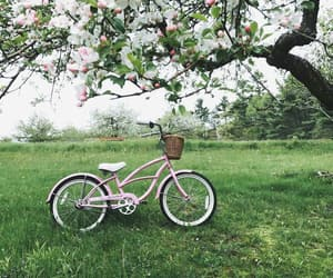 aesthetic, bicycle, and blossom image