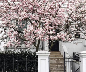 aesthetic, blossom, and cherry blossom image