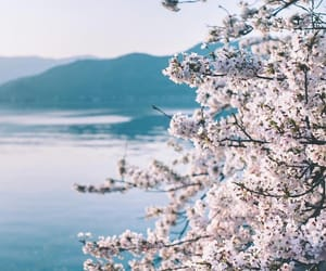 aesthetic, asia, and blossom image