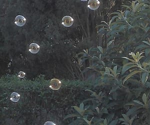 bubbles, nature, and aesthetic image