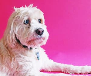 animals, dogs, and pink image