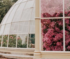 flowers, pink, and architecture image