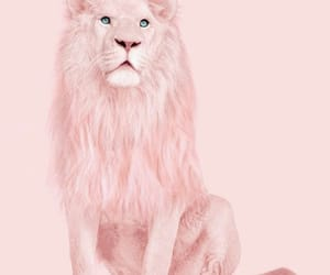 animals, girly, and lion image