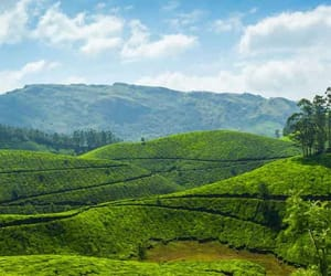 munnar, munnar places, and munnar places to visit image