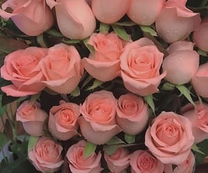 flowers and roses image