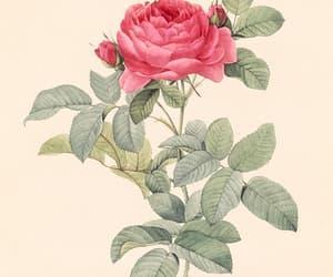 art, botanical, and roses image