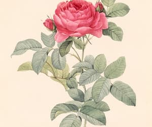 art, vintage, and botanical image