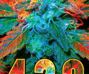 420, marijuana, and orange image