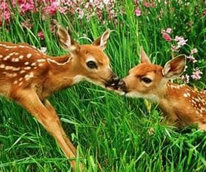 article, love, and deer image