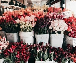 colorful, flower, and shop image