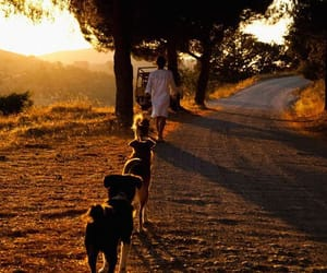 dog, sunset, and girl image