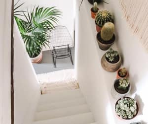 cactus, interior, and plants image