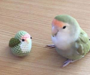 bird, cute, and funny image
