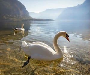 animals and nature image