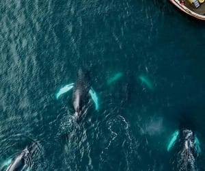 amazing, animal, and ocean image