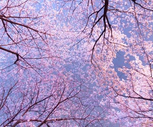 beautiful, cherry, and blossom image