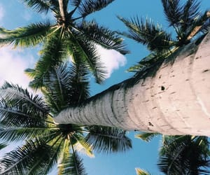 summer, tropical, and beach image