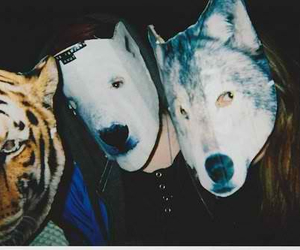 mask, tiger, and wolf image