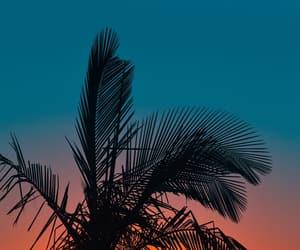beach, palm, and night image