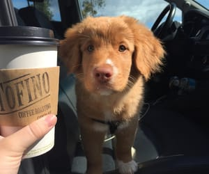 coffee, dog, and cute image
