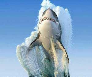 shark, nature, and ocean image