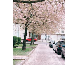beautiful, spring, and cherry image