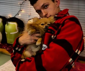 tom holland, spiderman, and dog image