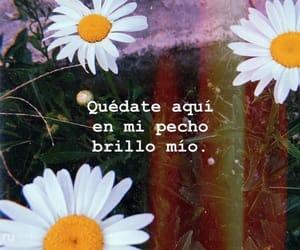 espanol, amor, and caloncho image