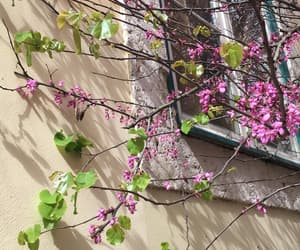 pink, spring, and flower image