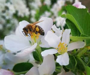 animal, bee, and flower image