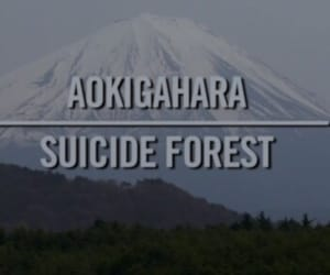 forest, aokigahara, and suicide image