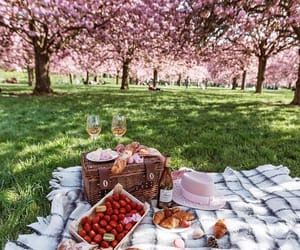 picnic, food, and nature image