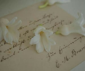 delicatessen, flowers, and letters image
