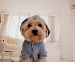 adorable, pets, and animals image