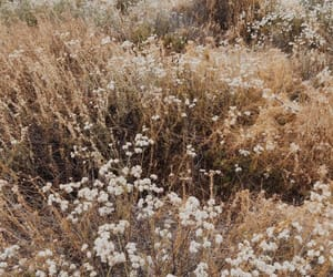 aesthetic, brown, and flowers image