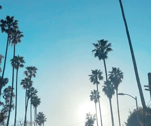 alternative, indie, and palms image