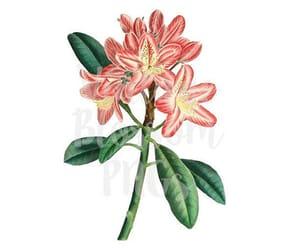 etsy, floral, and flower illustration image
