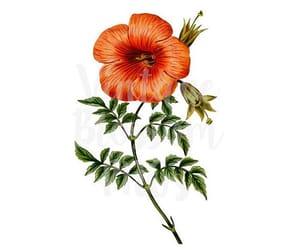 etsy, vintage flower, and flower image image