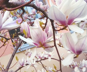 aesthetic, flowers, and magnolias image