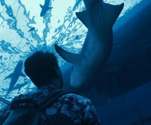 aesthetic, ocean, and shark image
