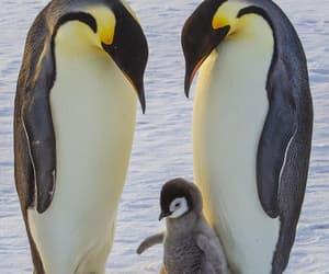 Animales, naturaleza, and bebé image